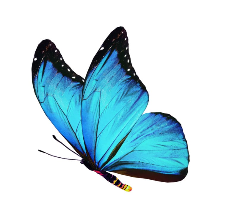 blue butterfly find self retreat